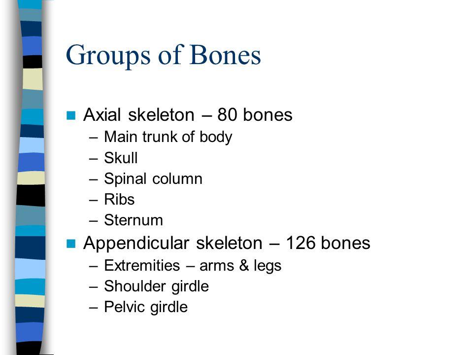 Groups of Bones Axial skeleton – 80 bones
