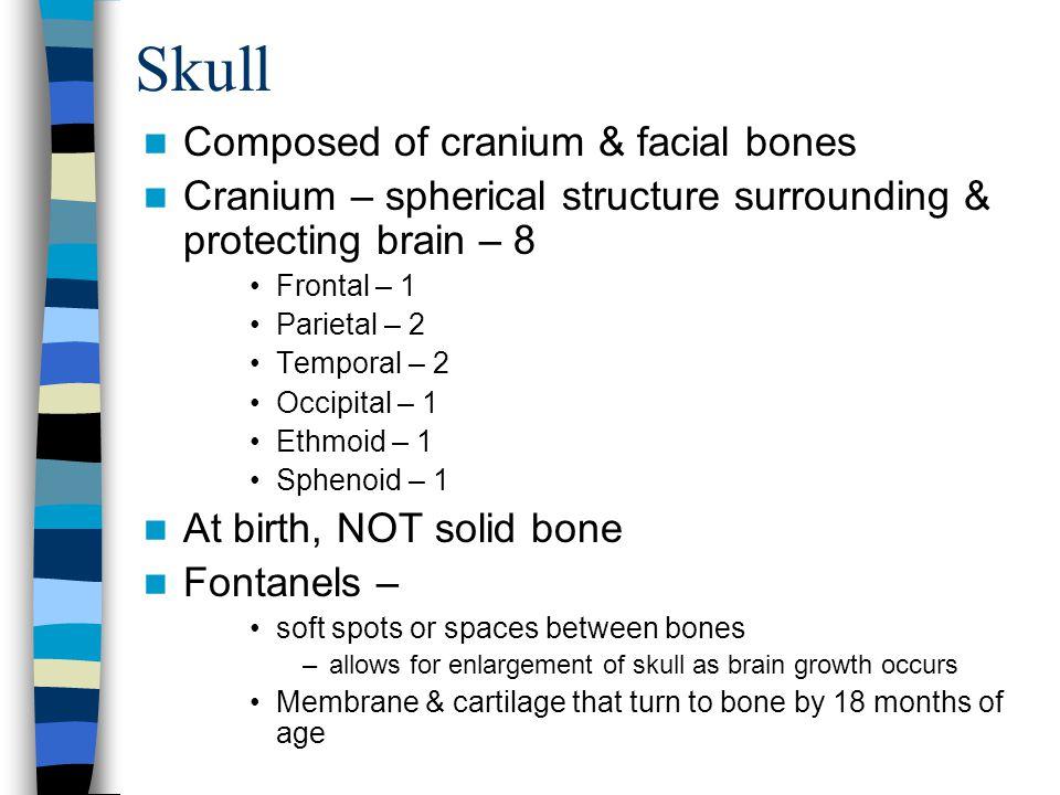 Skull Composed of cranium & facial bones