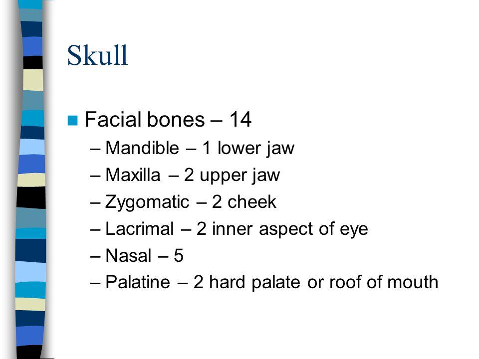 Skull Facial bones – 14 Mandible – 1 lower jaw Maxilla – 2 upper jaw