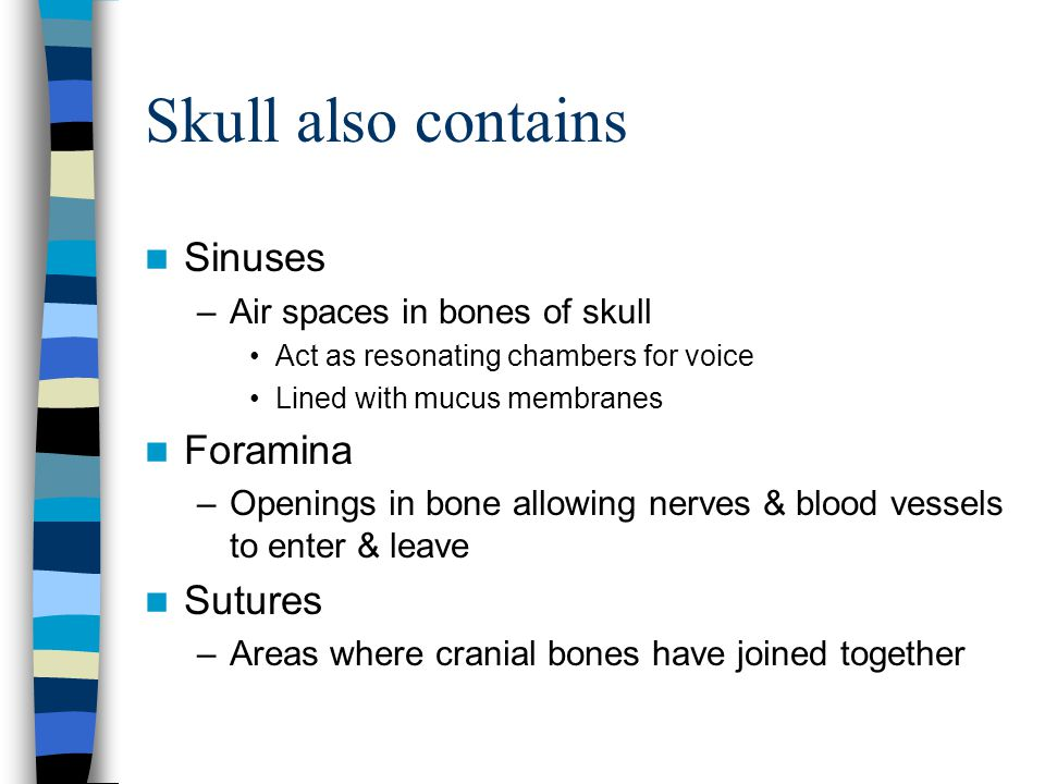 Skull also contains Sinuses Foramina Sutures