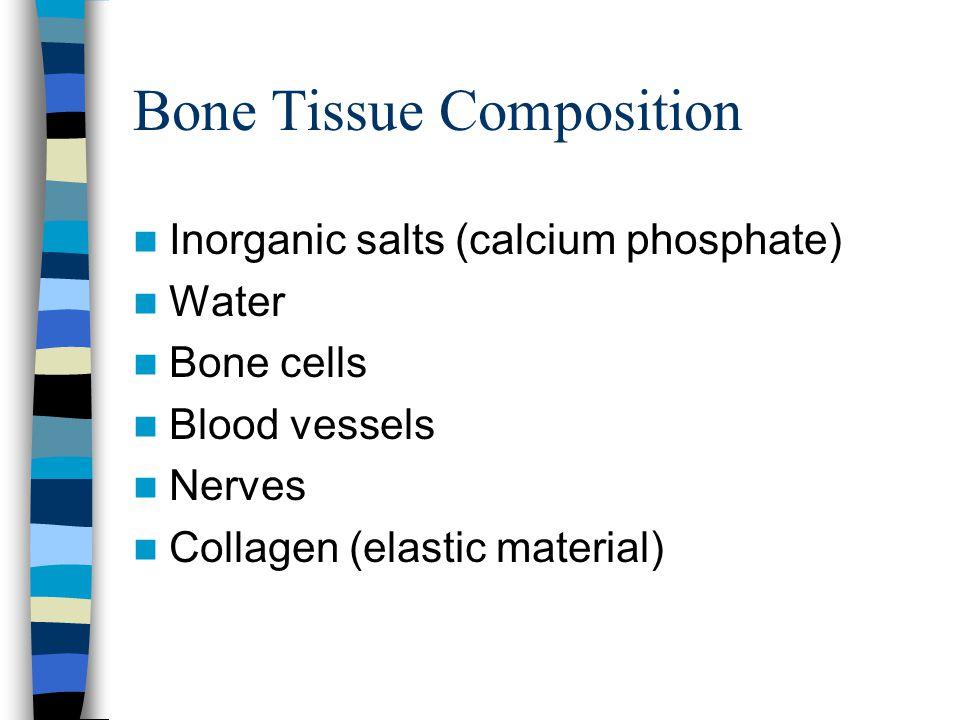 Bone Tissue Composition