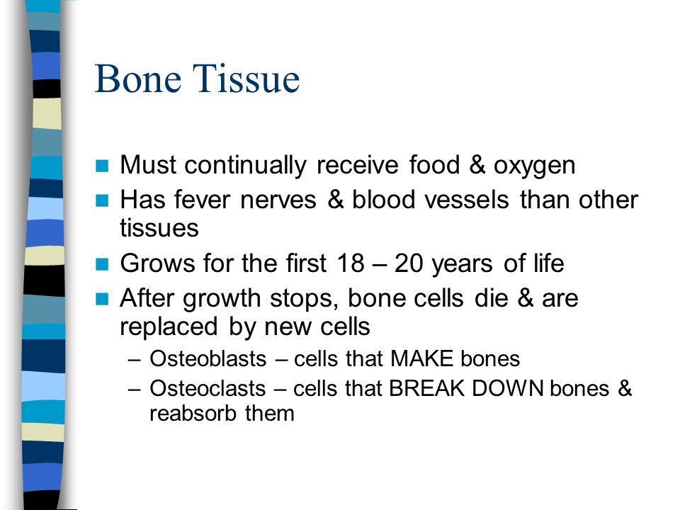 Bone Tissue Must continually receive food & oxygen