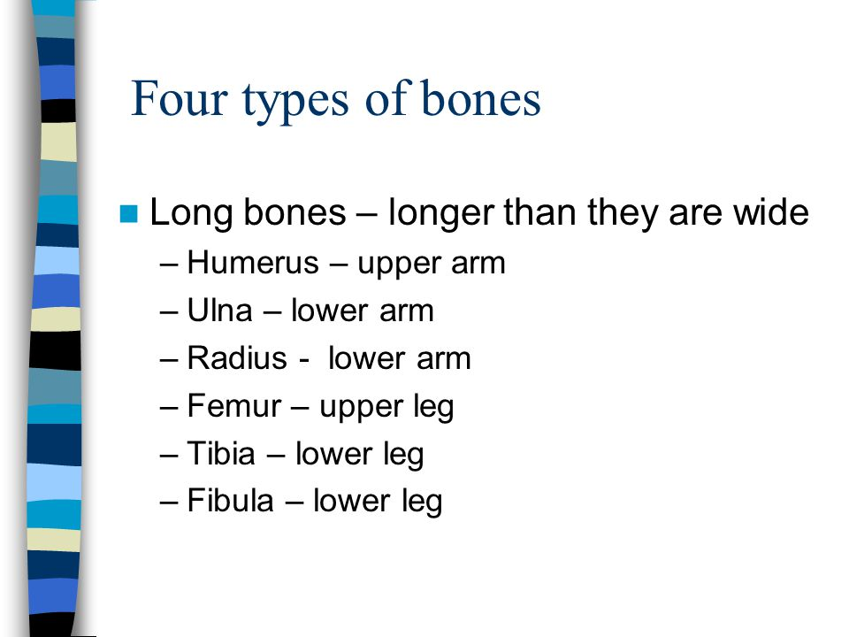 Four types of bones Long bones – longer than they are wide