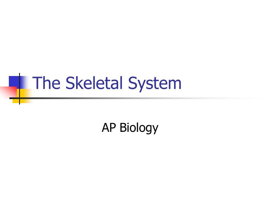 The Skeletal System AP Biology