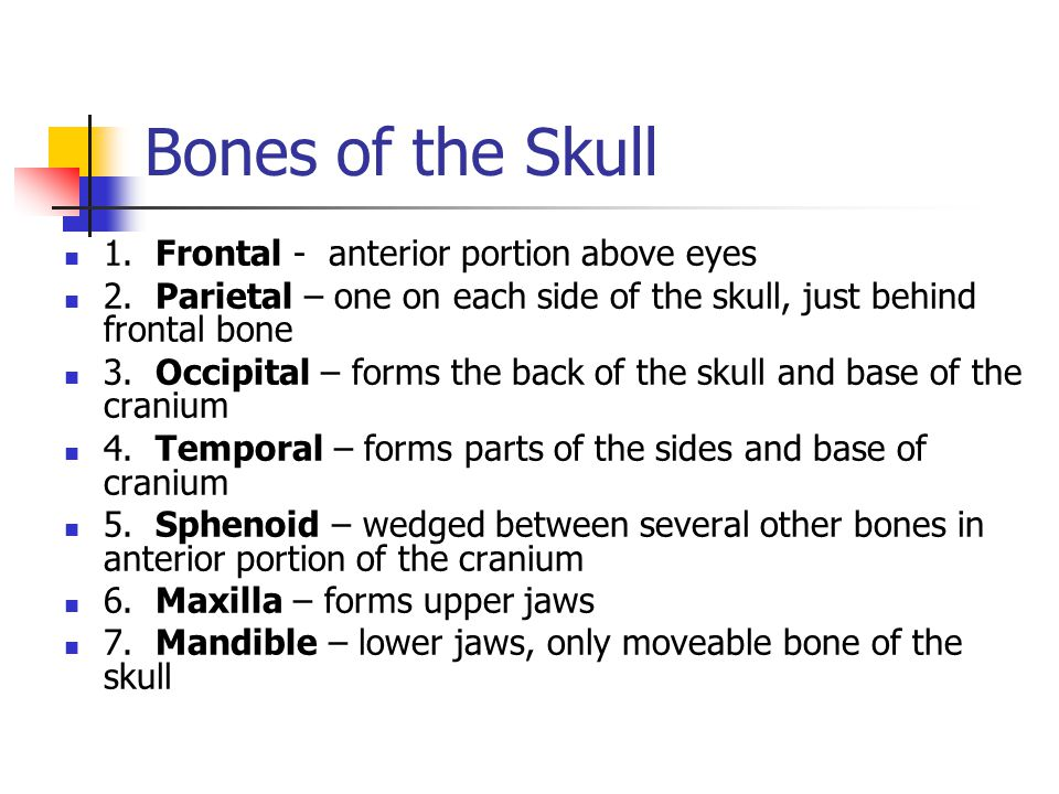 Bones of the Skull 1. Frontal - anterior portion above eyes