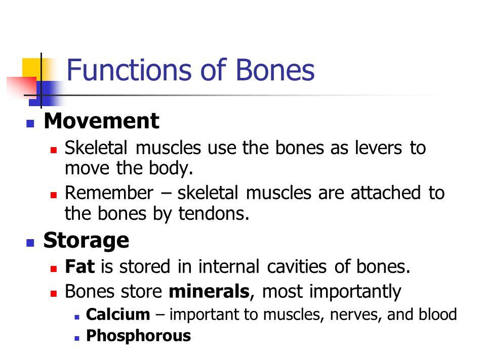 Functions of Bones Movement Storage
