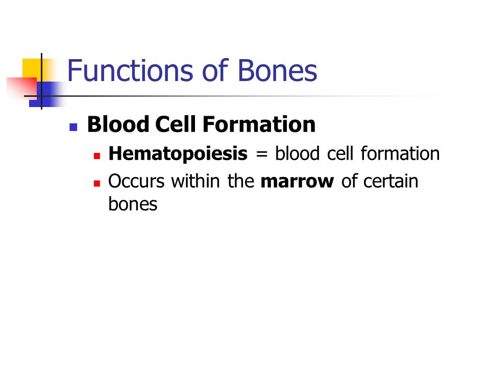 Functions of Bones Blood Cell Formation