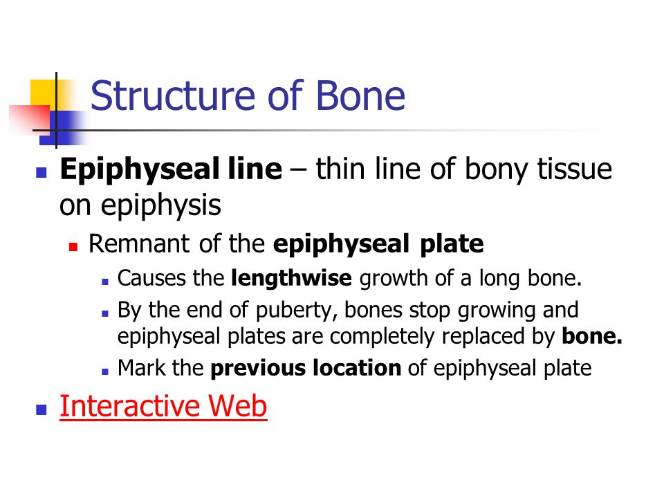 Structure of Bone Epiphyseal line – thin line of bony tissue on epiphysis. Remnant of the epiphyseal plate.
