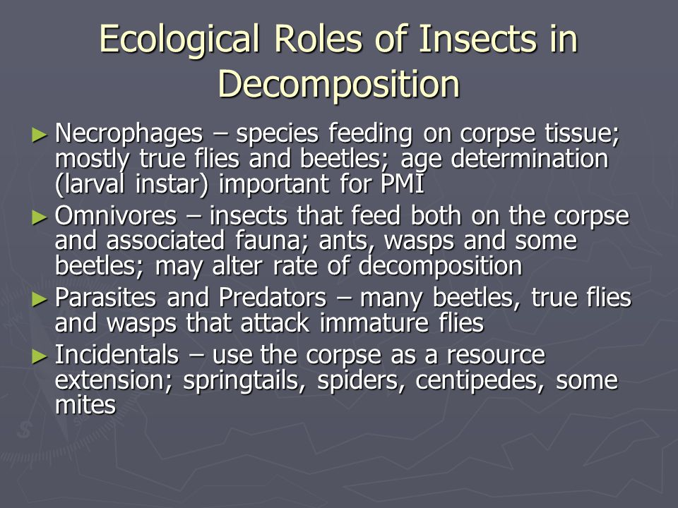 Ecological Roles of Insects in Decomposition