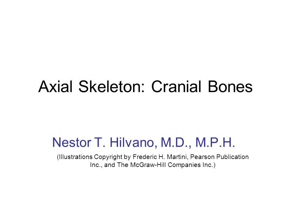 Axial Skeleton: Cranial Bones