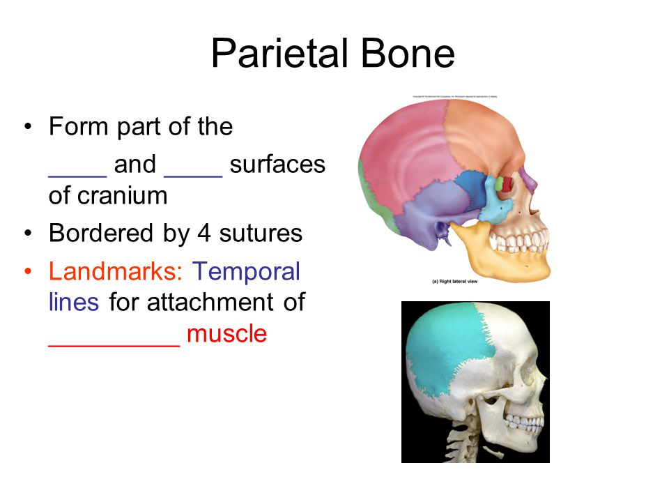 Parietal Bone Form part of the ____ and ____ surfaces of cranium