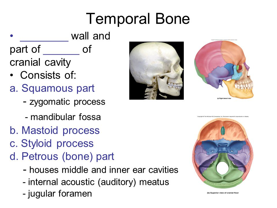 Temporal Bone ________ wall and part of ______ of cranial cavity