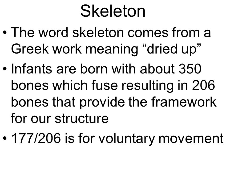 Skeleton The word skeleton comes from a Greek work meaning dried up