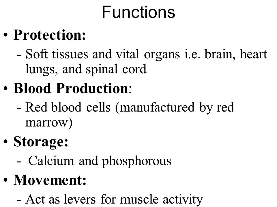 Functions Protection: Blood Production: Storage: Movement: