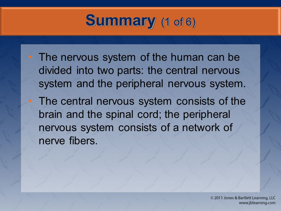 Summary (1 of 6) The nervous system of the human can be divided into two parts: the central nervous system and the peripheral nervous system.
