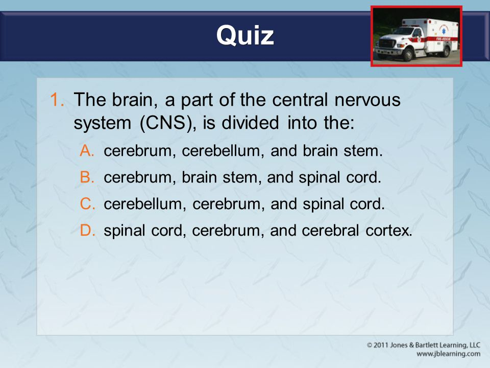 Quiz The brain, a part of the central nervous system (CNS), is divided into the: cerebrum, cerebellum, and brain stem.