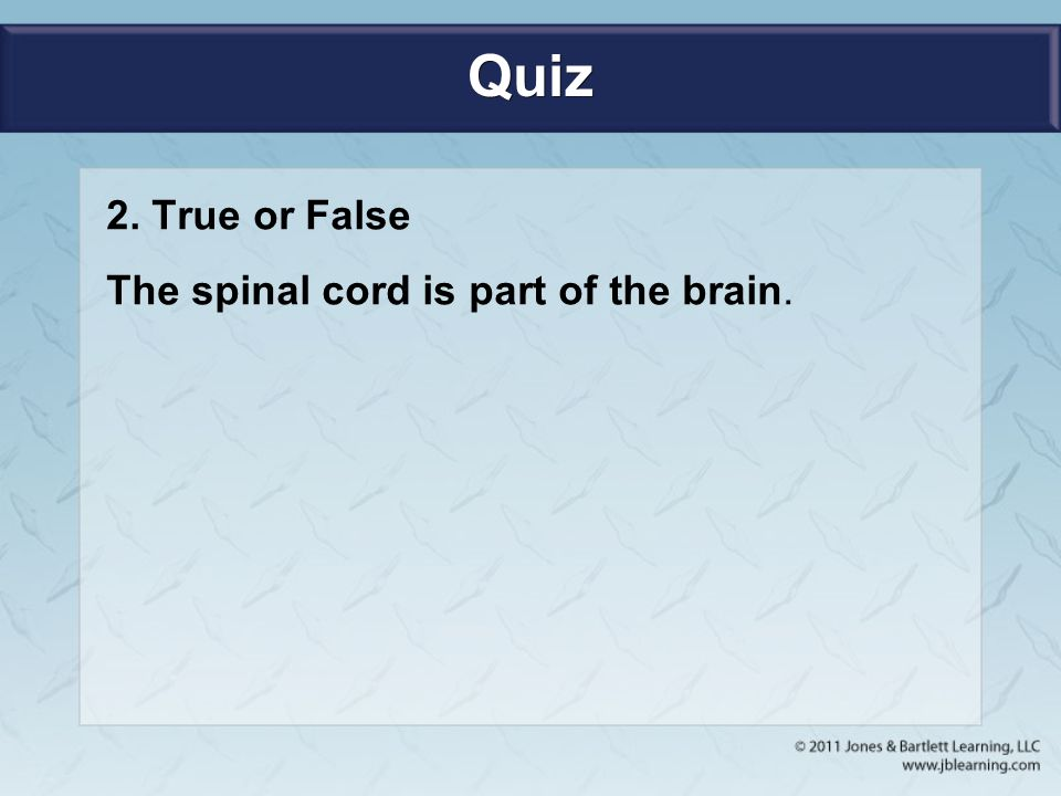 Quiz 2. True or False The spinal cord is part of the brain.