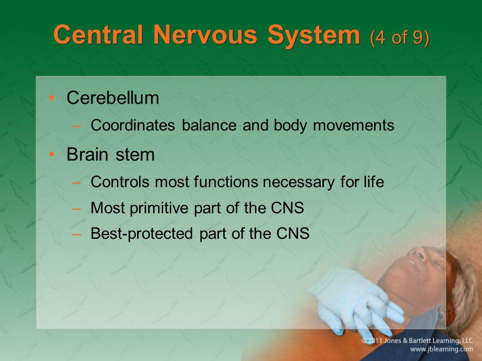 Central Nervous System (4 of 9)