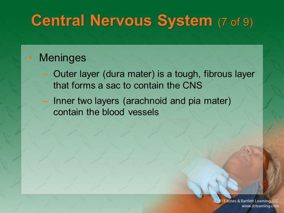 Central Nervous System (7 of 9)