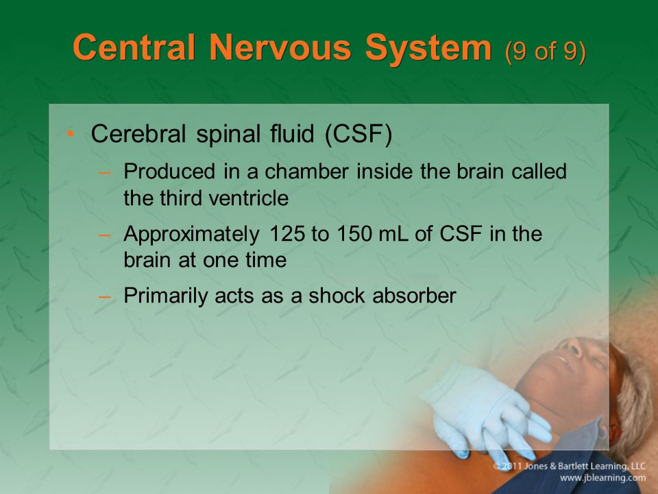 Central Nervous System (9 of 9)