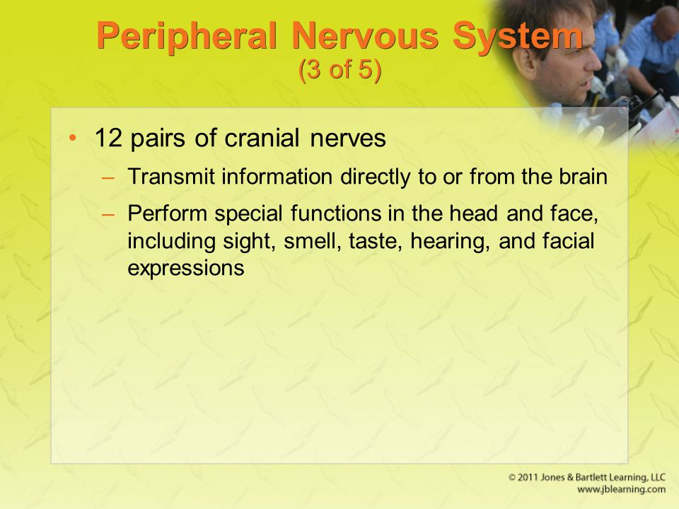 Peripheral Nervous System (3 of 5)