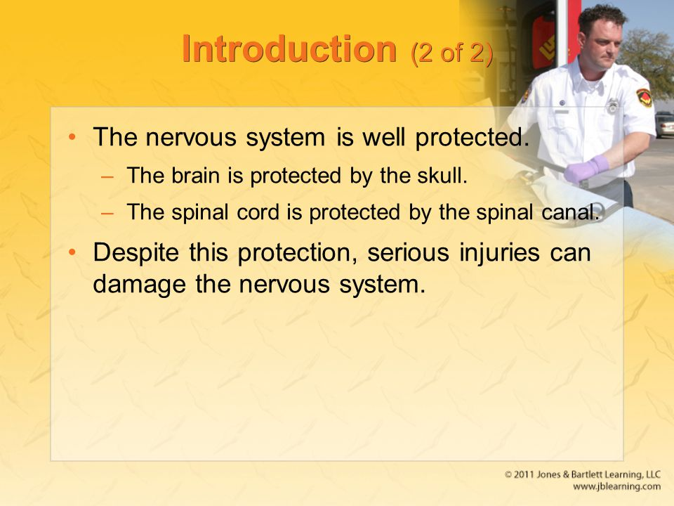 Introduction (2 of 2) The nervous system is well protected.