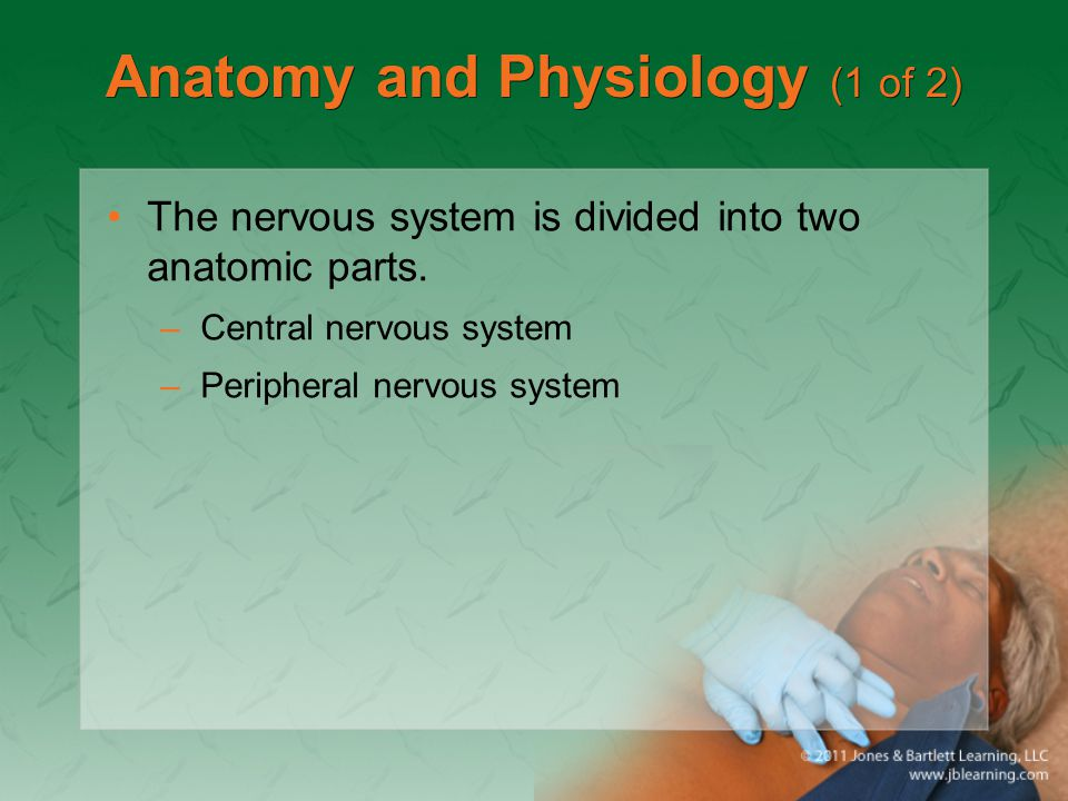 Anatomy and Physiology (1 of 2)