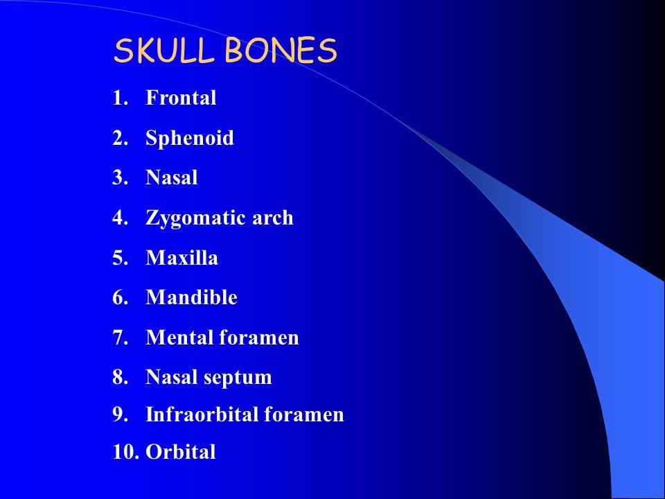 SKULL BONES Frontal Sphenoid Nasal Zygomatic arch Maxilla Mandible