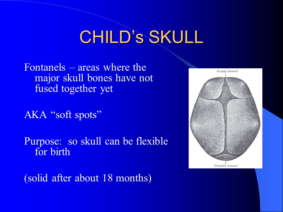 CHILD's SKULL Fontanels – areas where the major skull bones have not fused together yet. AKA soft spots