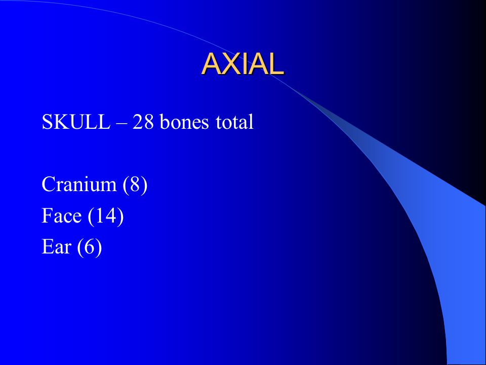 AXIAL SKULL – 28 bones total Cranium (8) Face (14) Ear (6)