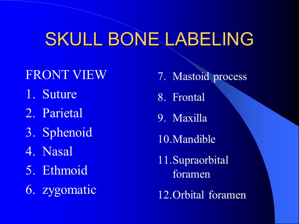SKULL BONE LABELING FRONT VIEW 1. Suture 2. Parietal 3. Sphenoid