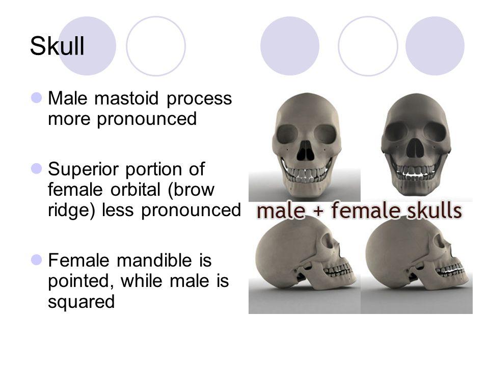 Skull Male mastoid process more pronounced