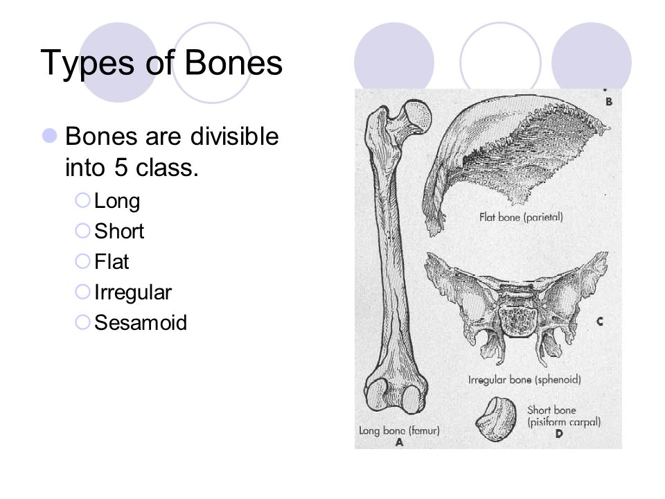 Types of Bones Bones are divisible into 5 class. Long Short Flat