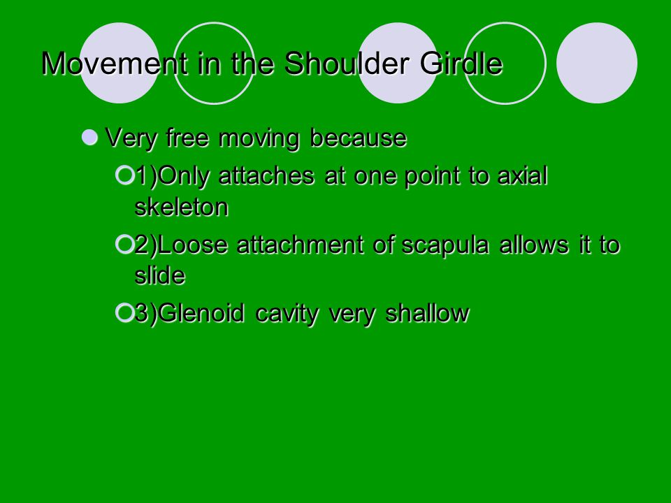 Movement in the Shoulder Girdle
