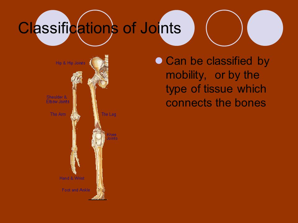 Classifications of Joints