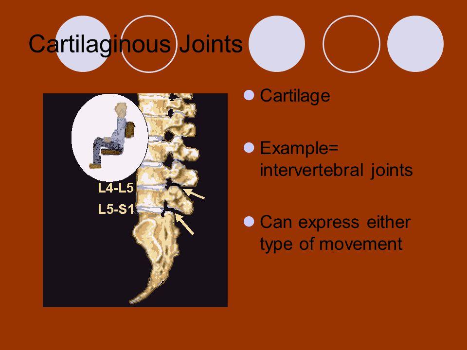 Cartilaginous Joints Cartilage Example= intervertebral joints