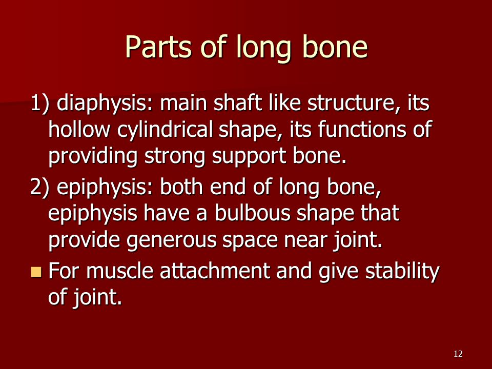 Parts of long bone 1) diaphysis: main shaft like structure, its hollow cylindrical shape, its functions of providing strong support bone.