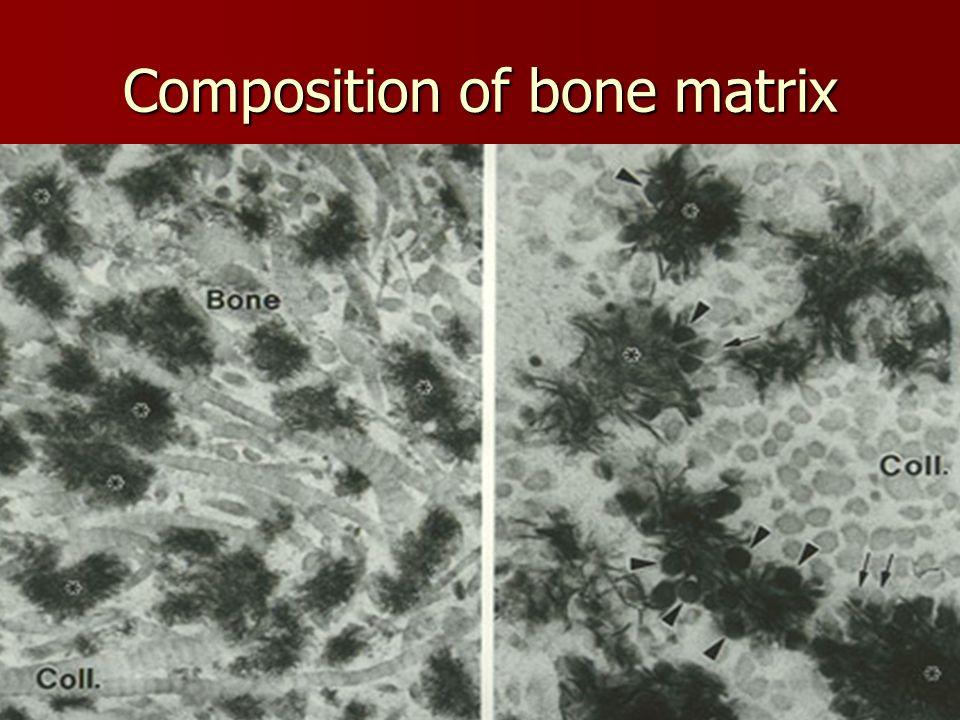 Composition of bone matrix