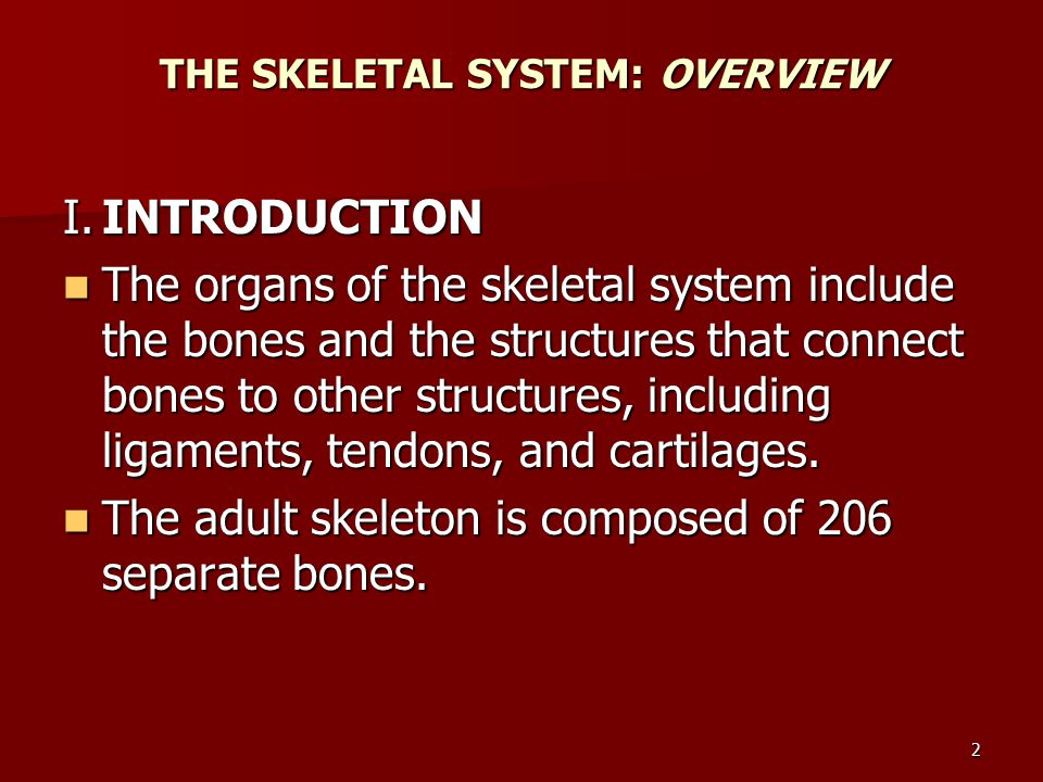 THE SKELETAL SYSTEM: OVERVIEW