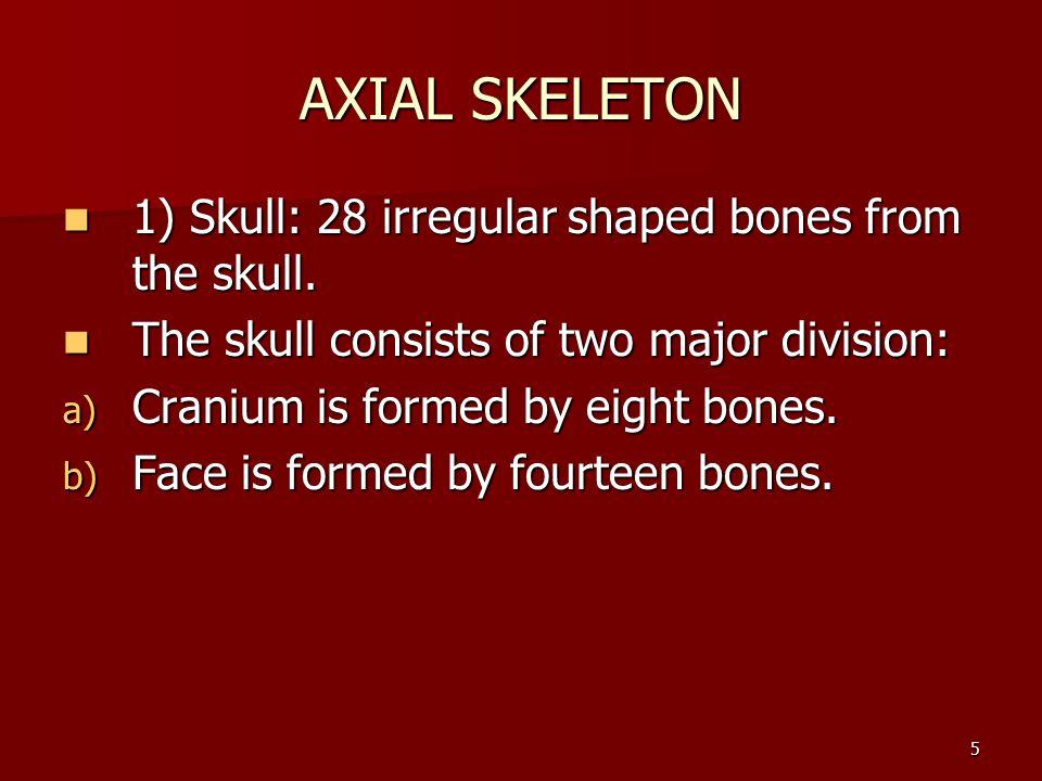 AXIAL SKELETON 1) Skull: 28 irregular shaped bones from the skull.