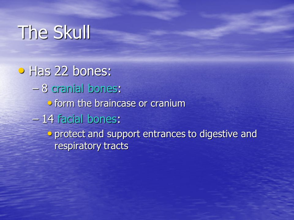 The Skull Has 22 bones: 8 cranial bones: 14 facial bones: