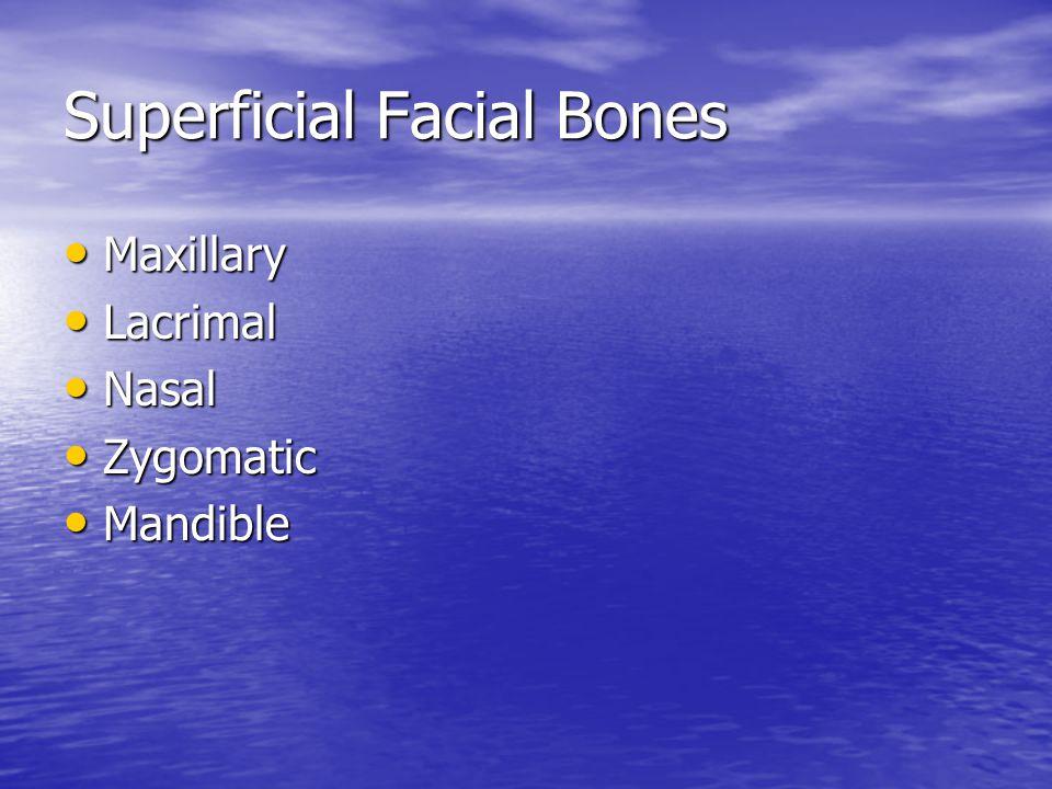 Superficial Facial Bones