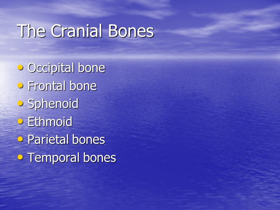 The Cranial Bones Occipital bone Frontal bone Sphenoid Ethmoid
