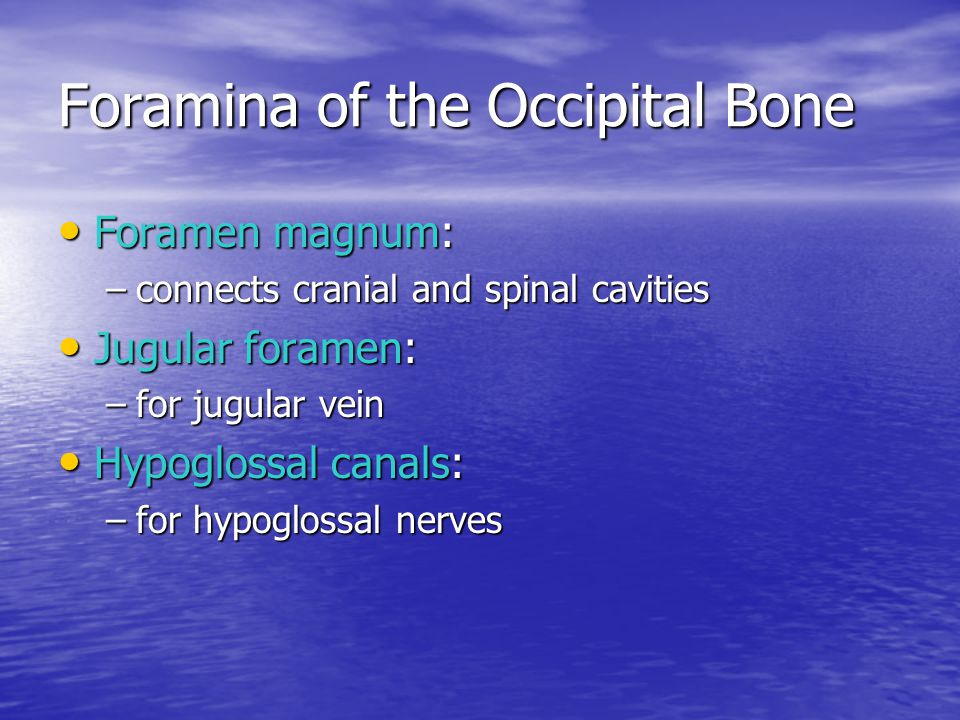 Foramina of the Occipital Bone
