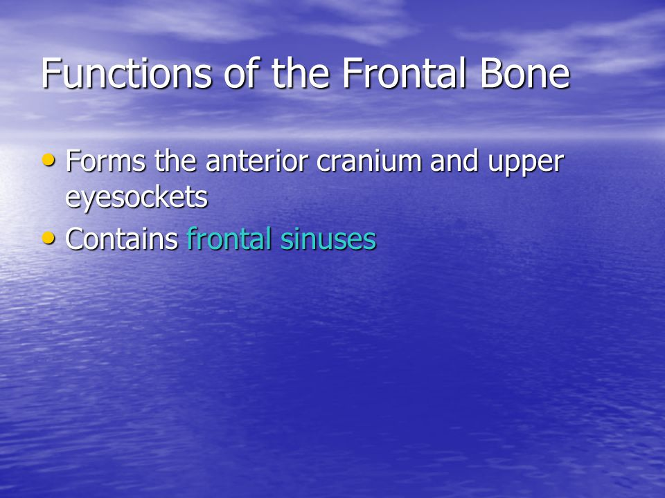 Functions of the Frontal Bone
