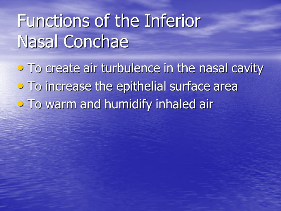 Functions of the Inferior Nasal Conchae