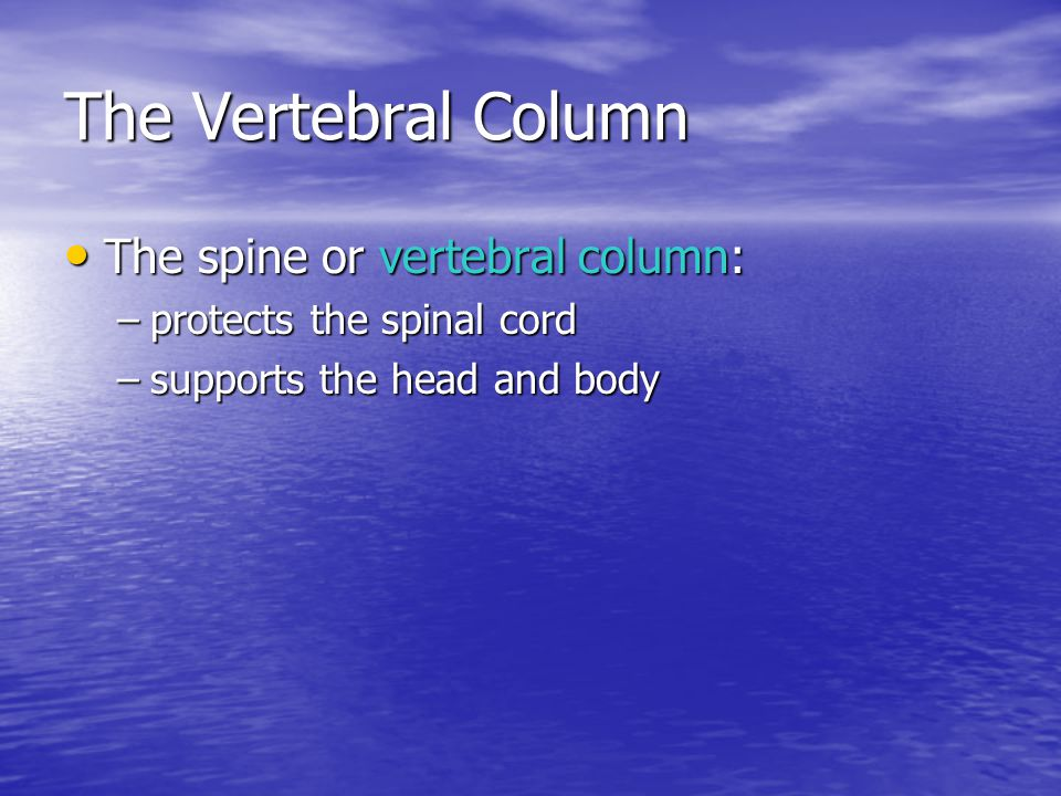 The Vertebral Column The spine or vertebral column: