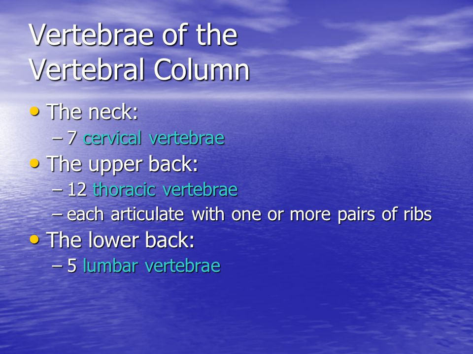 Vertebrae of the Vertebral Column