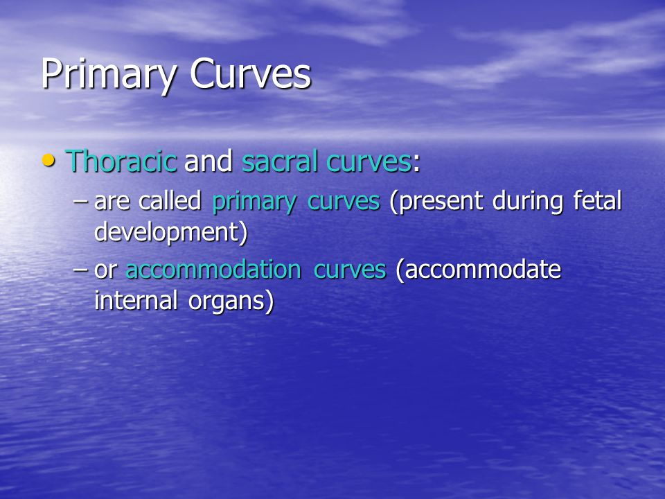 Primary Curves Thoracic and sacral curves: