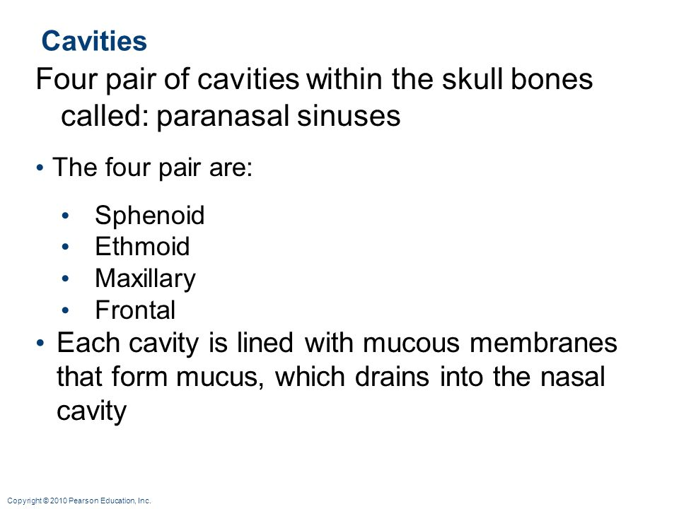 Four pair of cavities within the skull bones called: paranasal sinuses